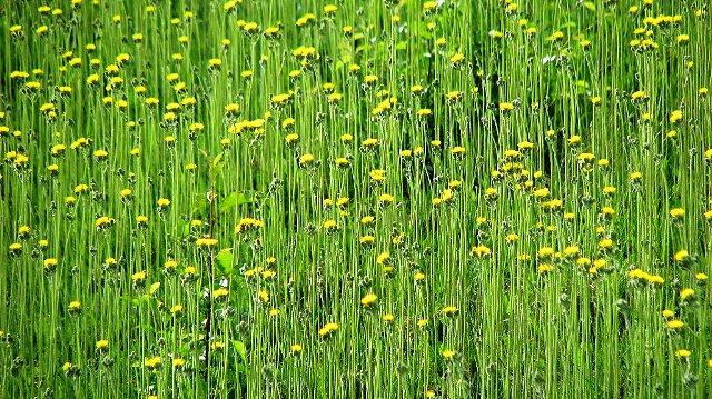 cỏ dại buổi chiều