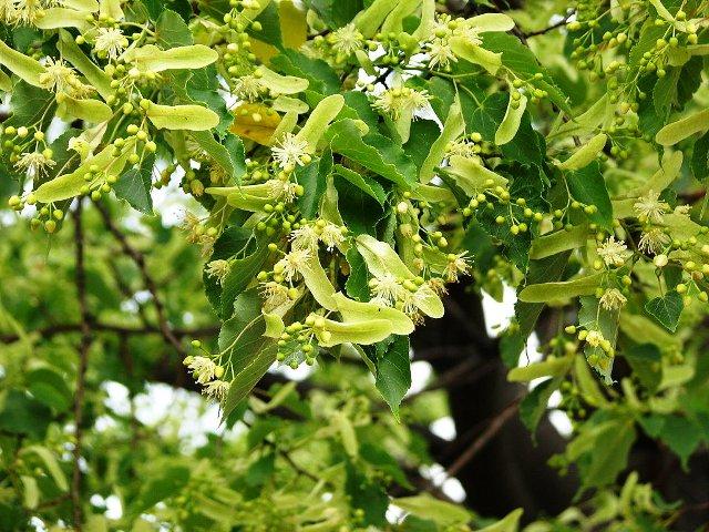 hoa xanh lá cây