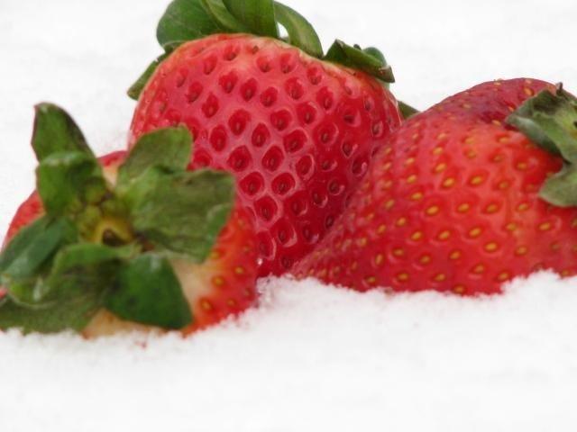 dâu strawberry trên tuyết