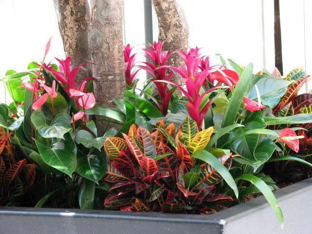 hoa trong concourse