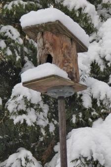 nhà cho chim