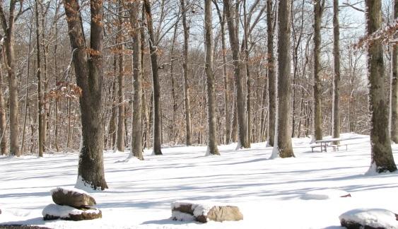 rừng Watchung