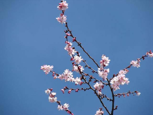 đào và bầu trời tháng 4