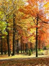 rừng thu