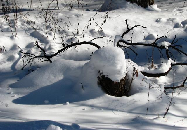 Nhện tuyết