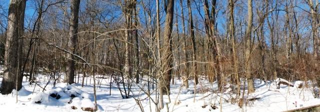 Rừng sau nhà sau cơn bão tuyết
