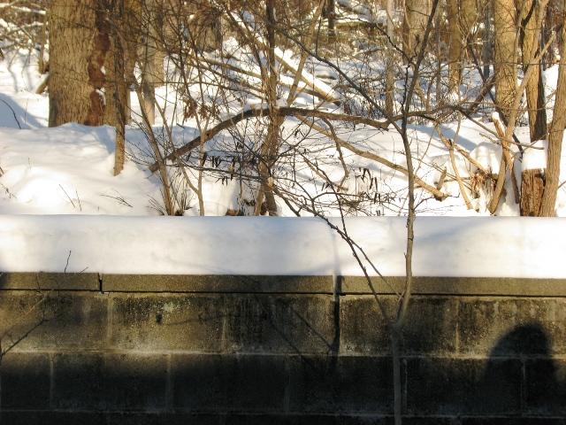 Tuyết dày 2 tấc