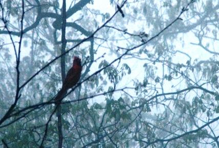 Bóng chim trong sương mù