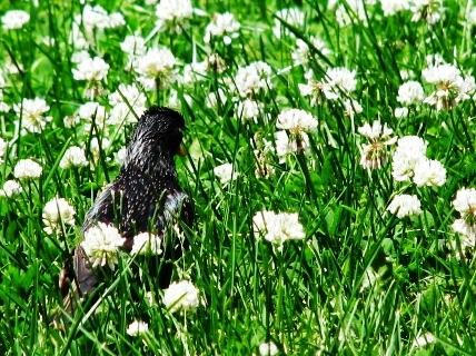 giữa đồng cỏ