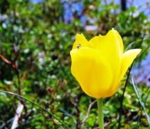 Kiến đậu cành hoa