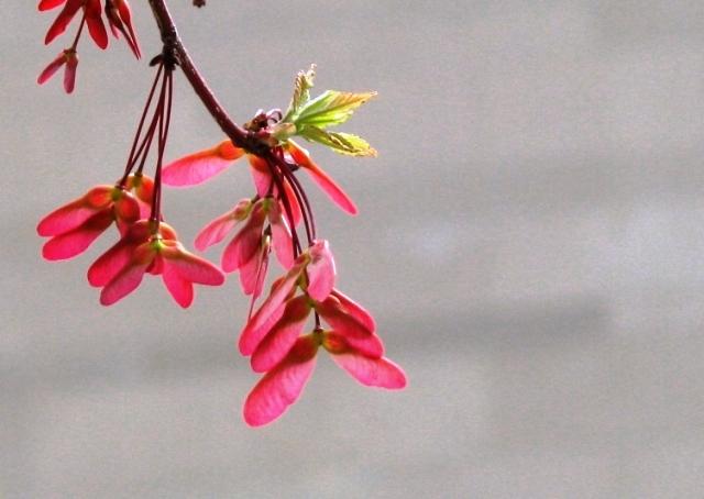 Là lá hay là hoa