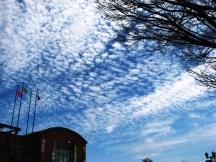 Mây vảy rồng