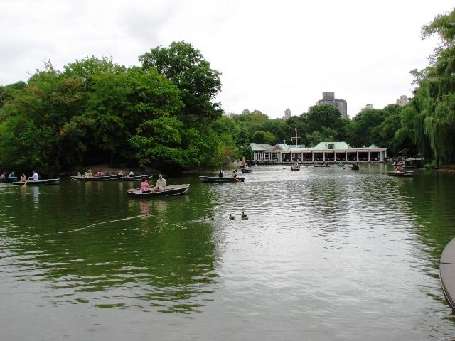 Ngỗng trên sông