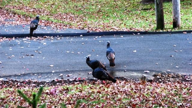 Turkey trước nhà