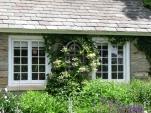 cửa sổ với giàn hoa leo