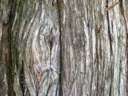 vỏ cây