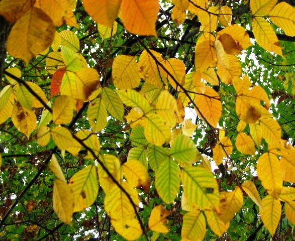 dưới lá trong cây