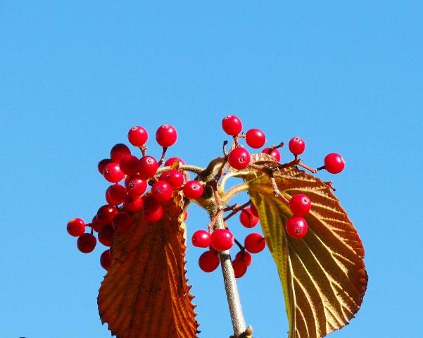đỏ thắm