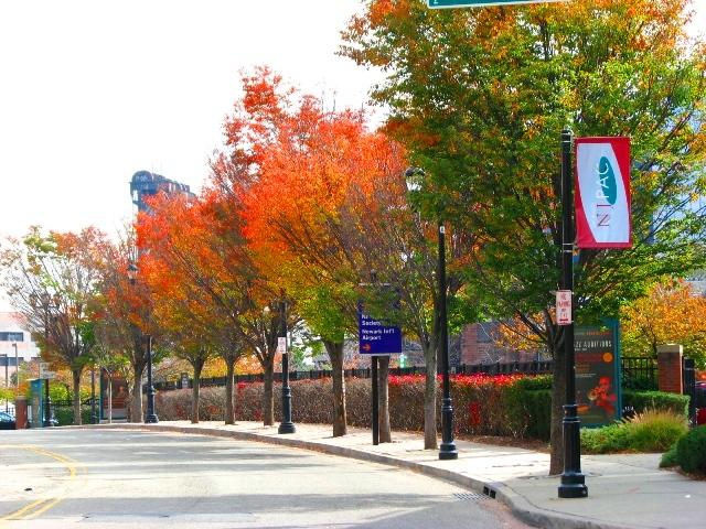 hàng cây bên đường