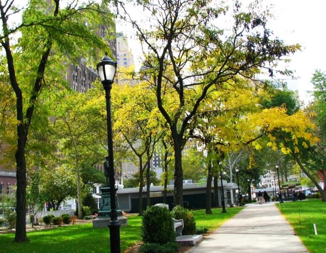hàng cây trong công viên