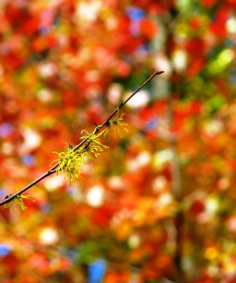 nhánh cây trên nền trời thu