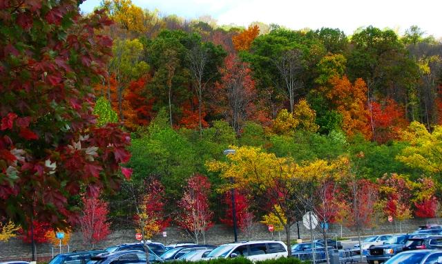 rừng phía sau shopping mall