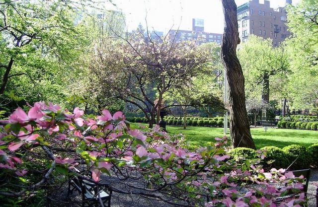 Dogwood bên trong tư viên Gramercy