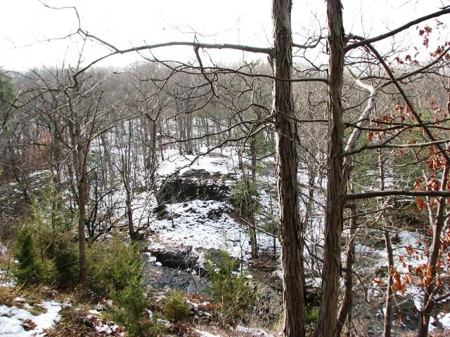 rừng mùa đông