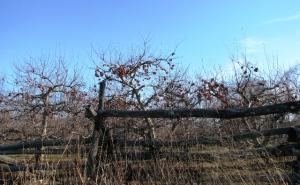 vườn táo mùa đông