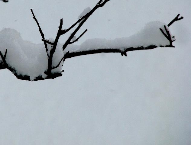 cành dưới tuyết