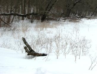 chơ vơ giữa đồng tuyết