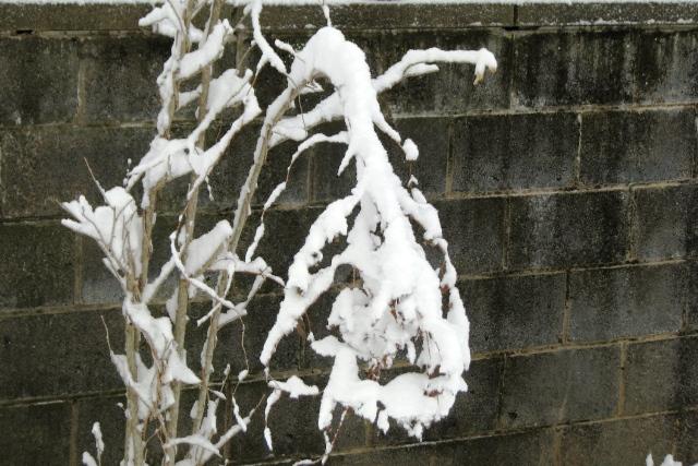 dây treo tuyết