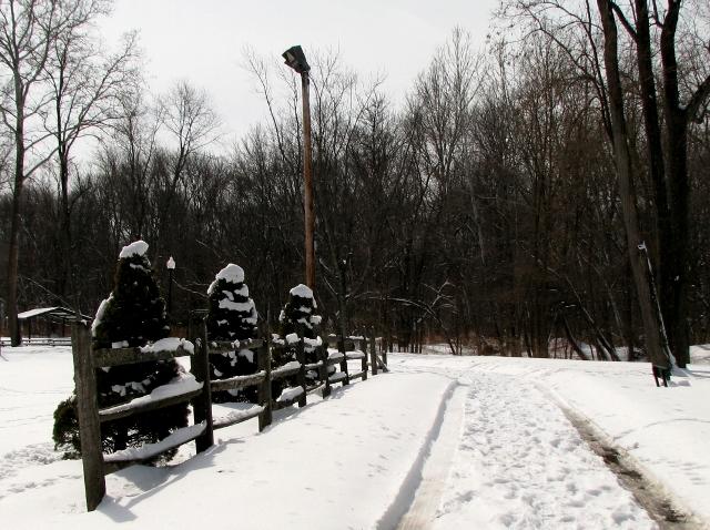 hàng tùng cạnh rào