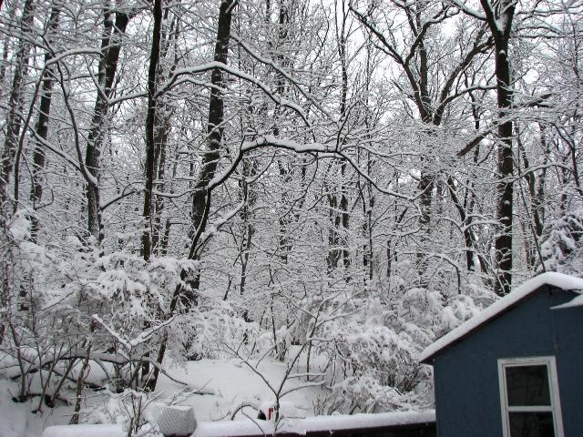 rừng sau nhà kho