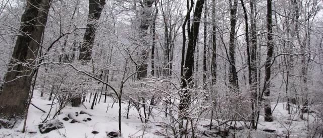 Rừng sau nhà phủ tuyết