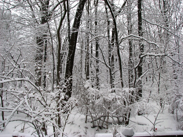 rừng tuyết