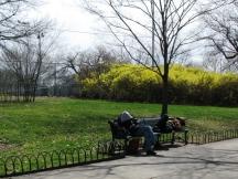 ngủ trong nắng vàng, trên ghế đá công viên, đằng sau là rừng hoa rực rỡ