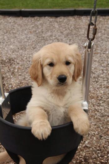 Cún của face book Lilac Tran. Ngồi sẵn trong nồi đây này.