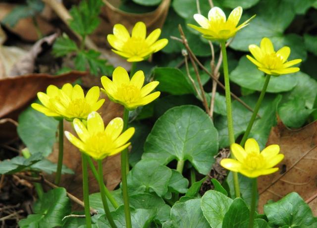 cụm hoa dại