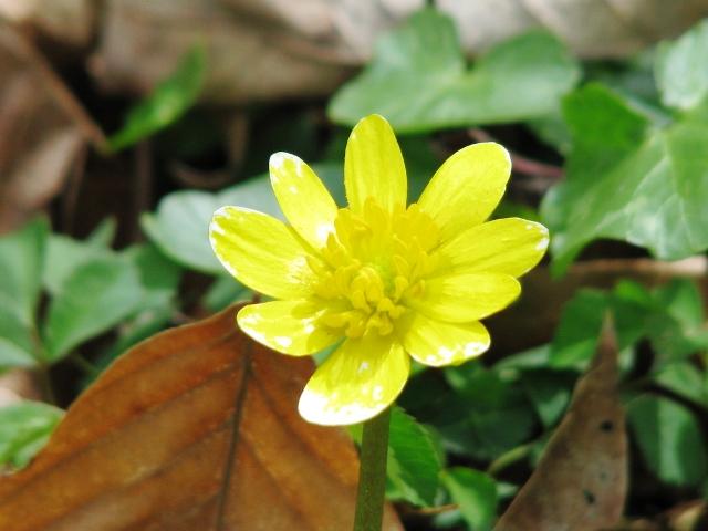 hoa dại trên đường hiking