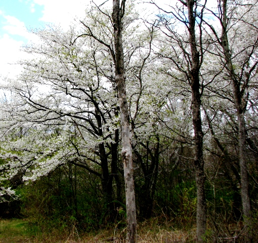 hoa nở trong rừng