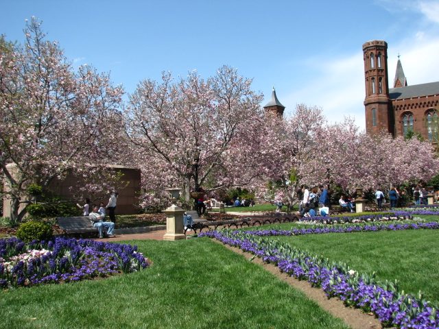 magnolia ở Smithsonian museum