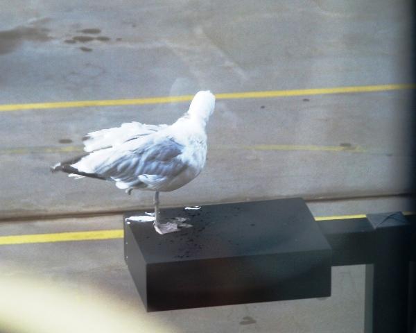 con chim một chân