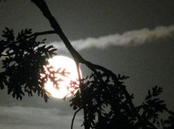 trăng sau nhánh sồi