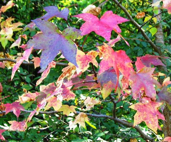 lá đang chuyển màu