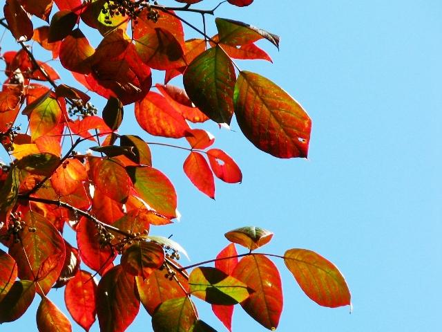 lá đỏ và trời xanh