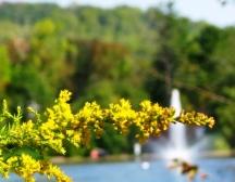 nhánh hoa vàng