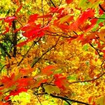 mùa lá màu