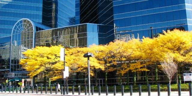 mùa thu trong thành phố