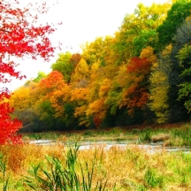 một góc rừng bên hồ